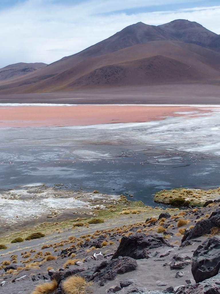 Bolivie Lagouna Colorada