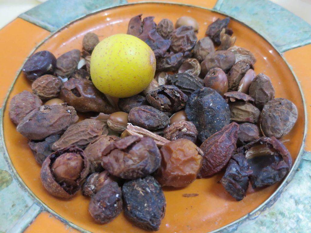 Fruits de l'arganier Maroc
