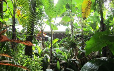La vanille à l'Ile de la Réunion