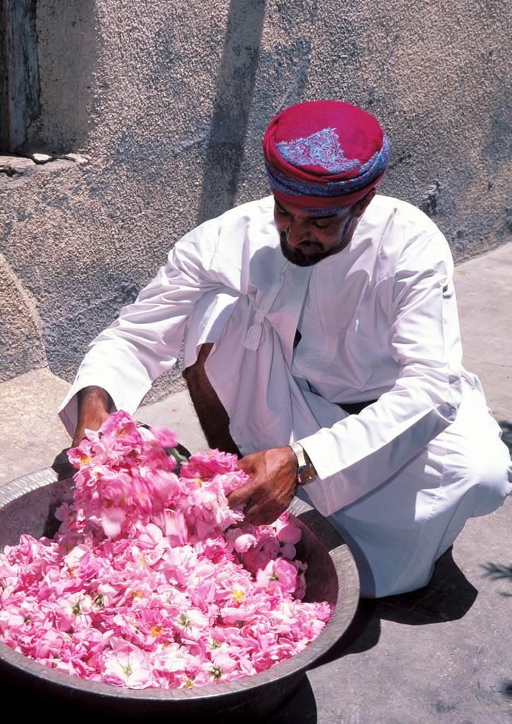 Oman roses de Damas