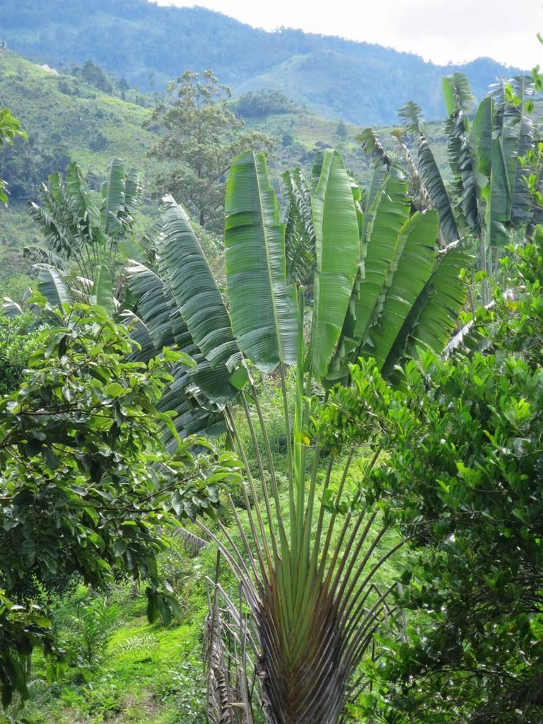 Madgascar Ranomafana