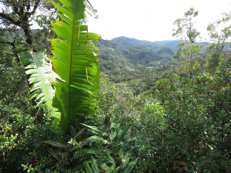 Madagascar Ranomafana