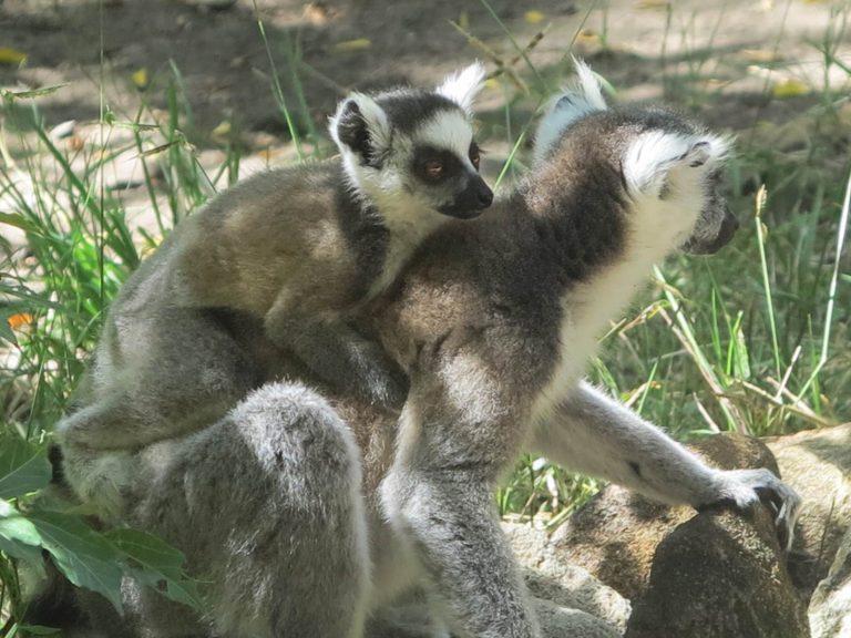 Isalo Madagascar