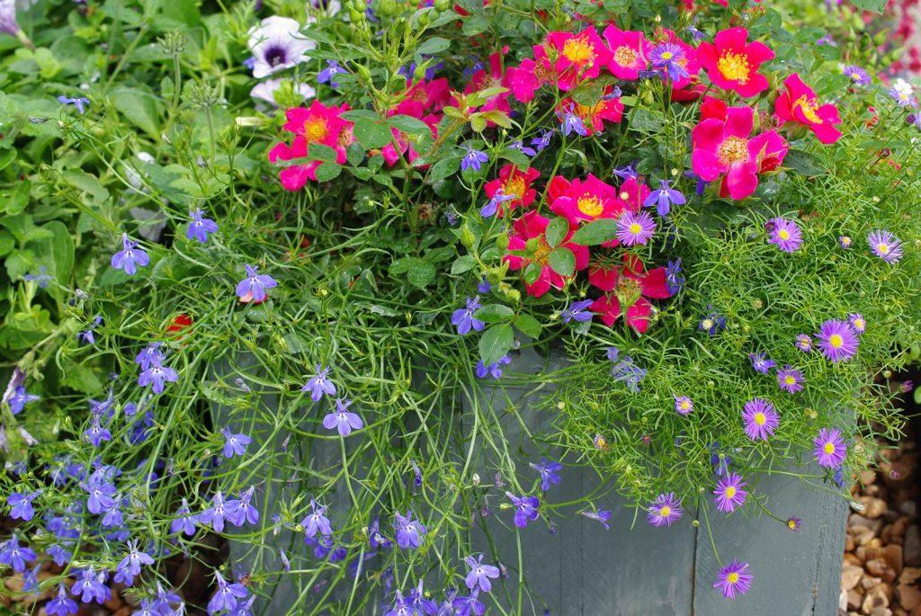 Jardin en pot