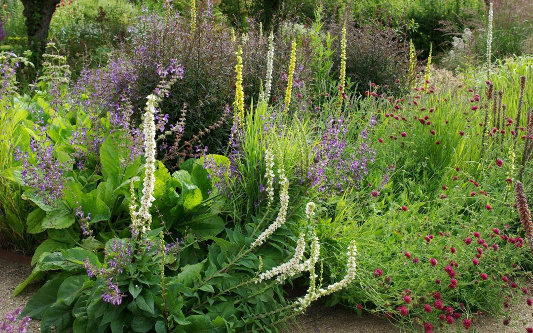 Cambo Walled Gardens, entre nature et jardins