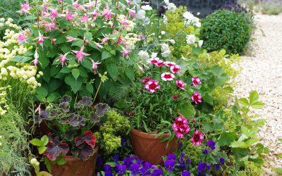 Jardin en pot, c'est l'été
