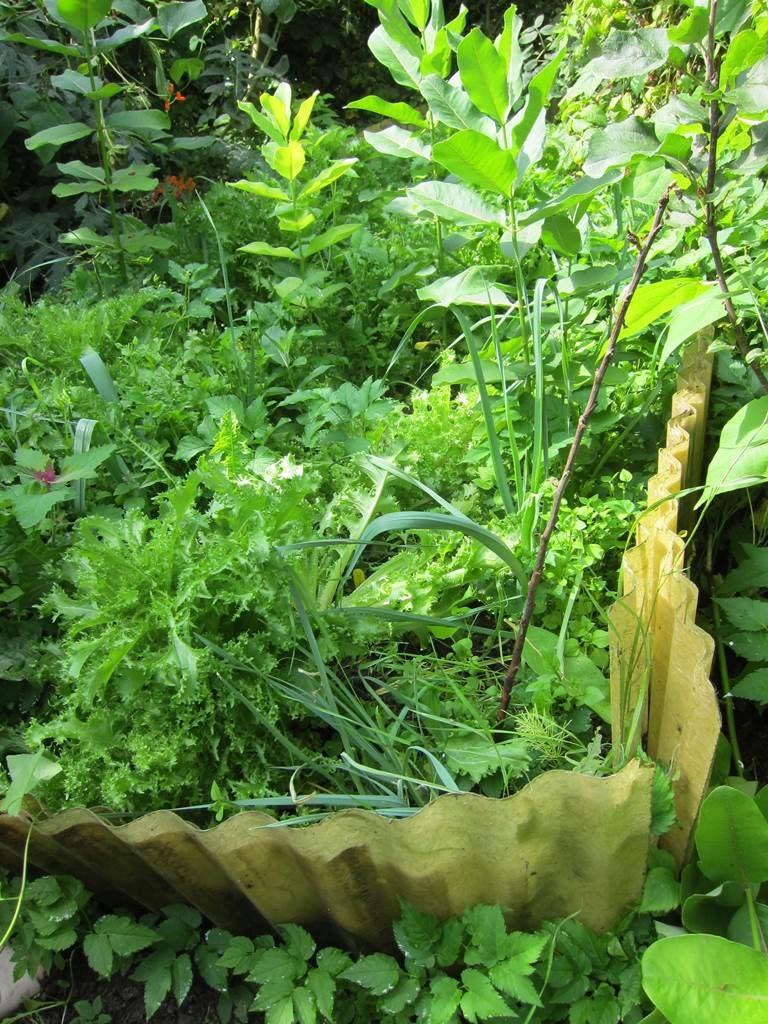 Fraternités Ouvrières permaculture