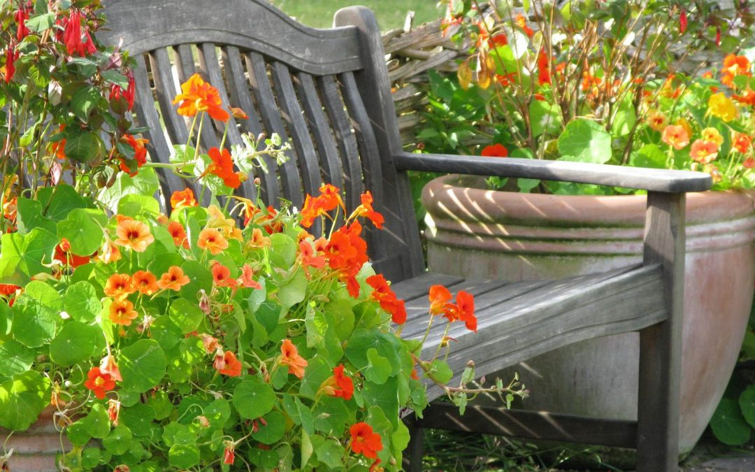 potager fleuri des l gumes et des fleurs la terre est un jardin. Black Bedroom Furniture Sets. Home Design Ideas