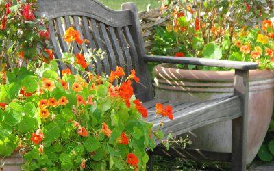 Potager fleuri, des légumes et des fleurs