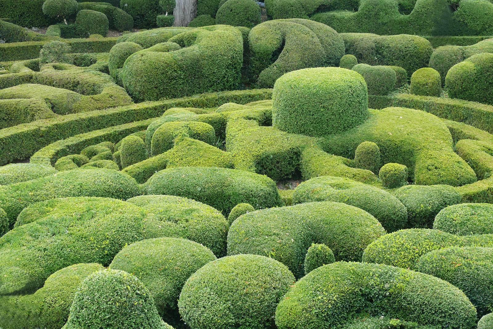 Sculpture Grillage A Poule art topiaire, sculpture en vert - la terre est un jardin