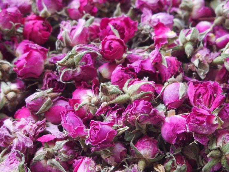 Vallée de roses Maroc