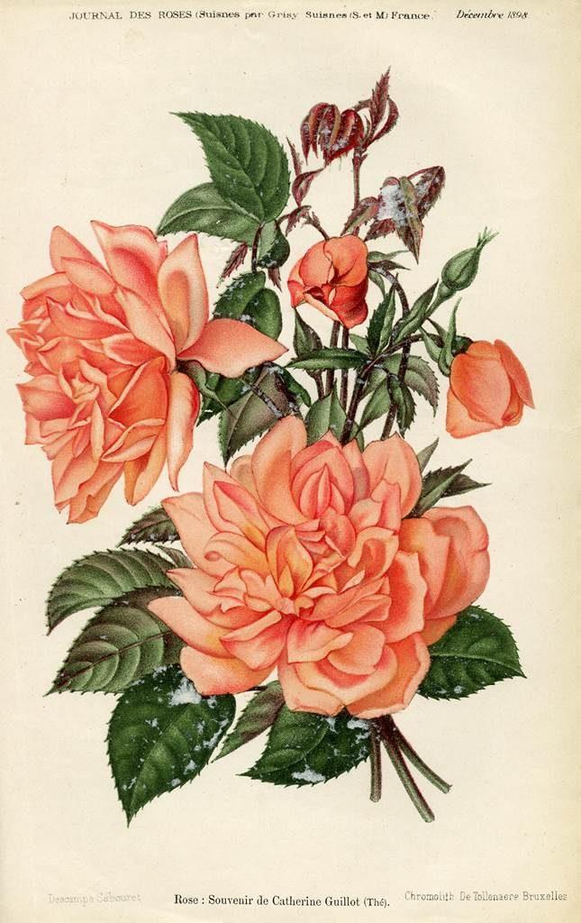 Souvenir de Catherine Guillot