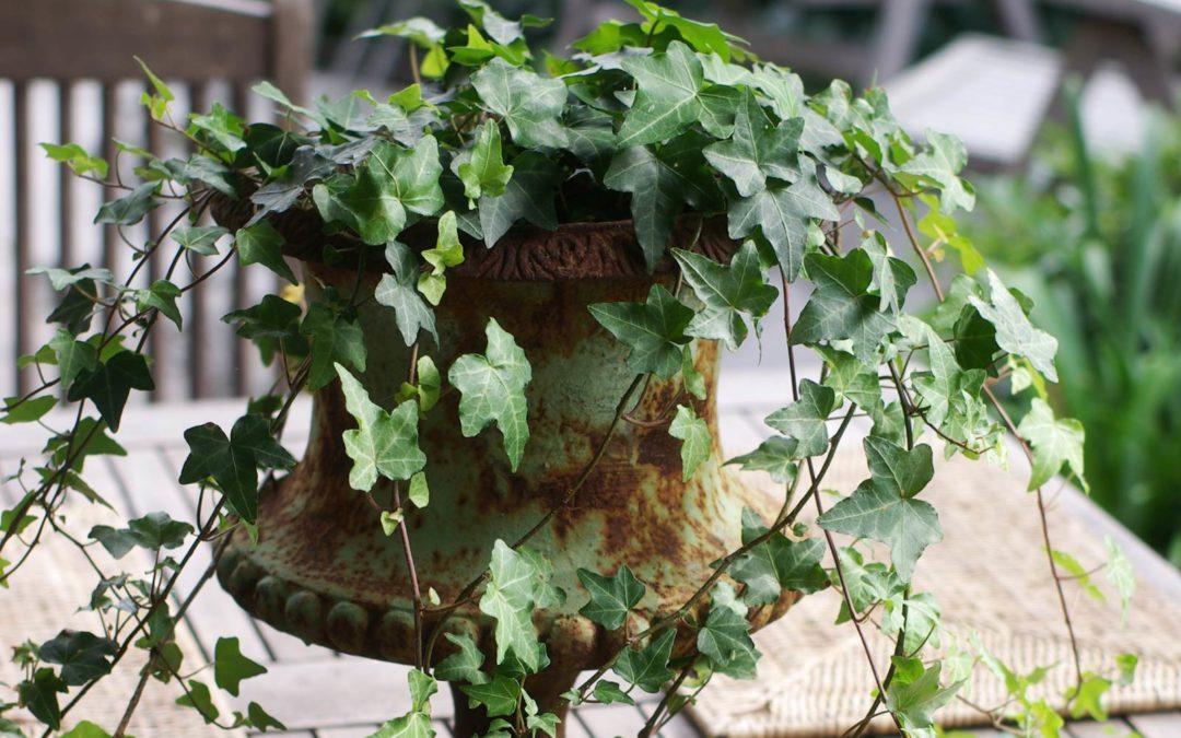 Une terrasse en hiver la terre est un jardin for Plante terrasse hiver