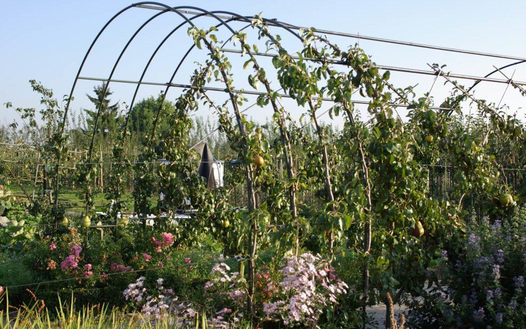Le palissage des arbres fruitiers