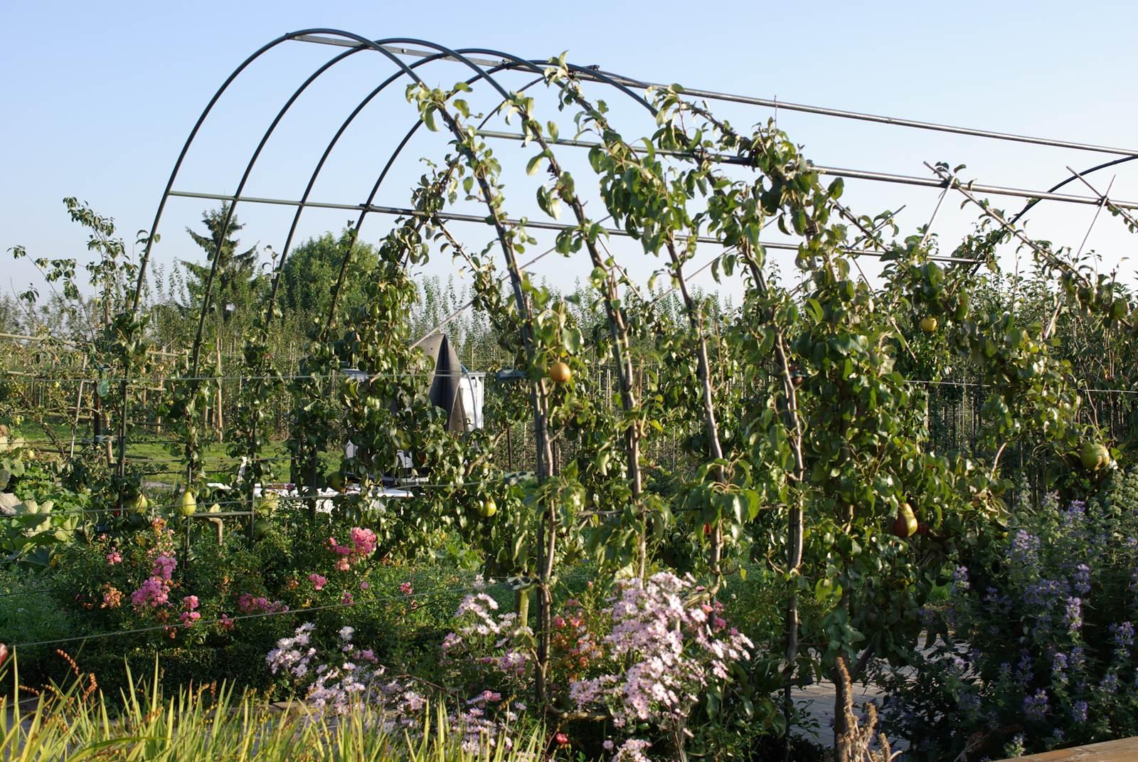 le palissage des arbres fruitiers la terre est un jardin. Black Bedroom Furniture Sets. Home Design Ideas