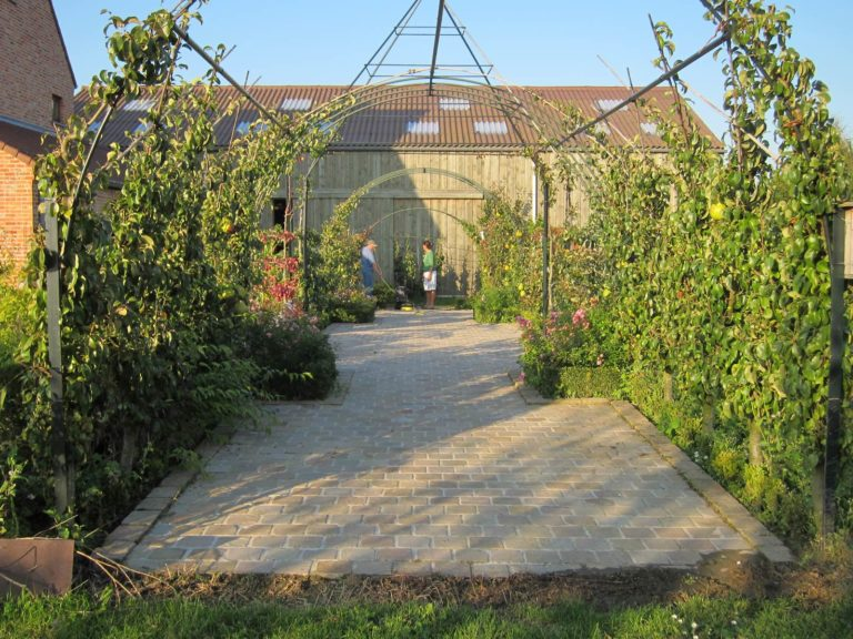 palissage des arbres fruitiers pepinières d'Enghien