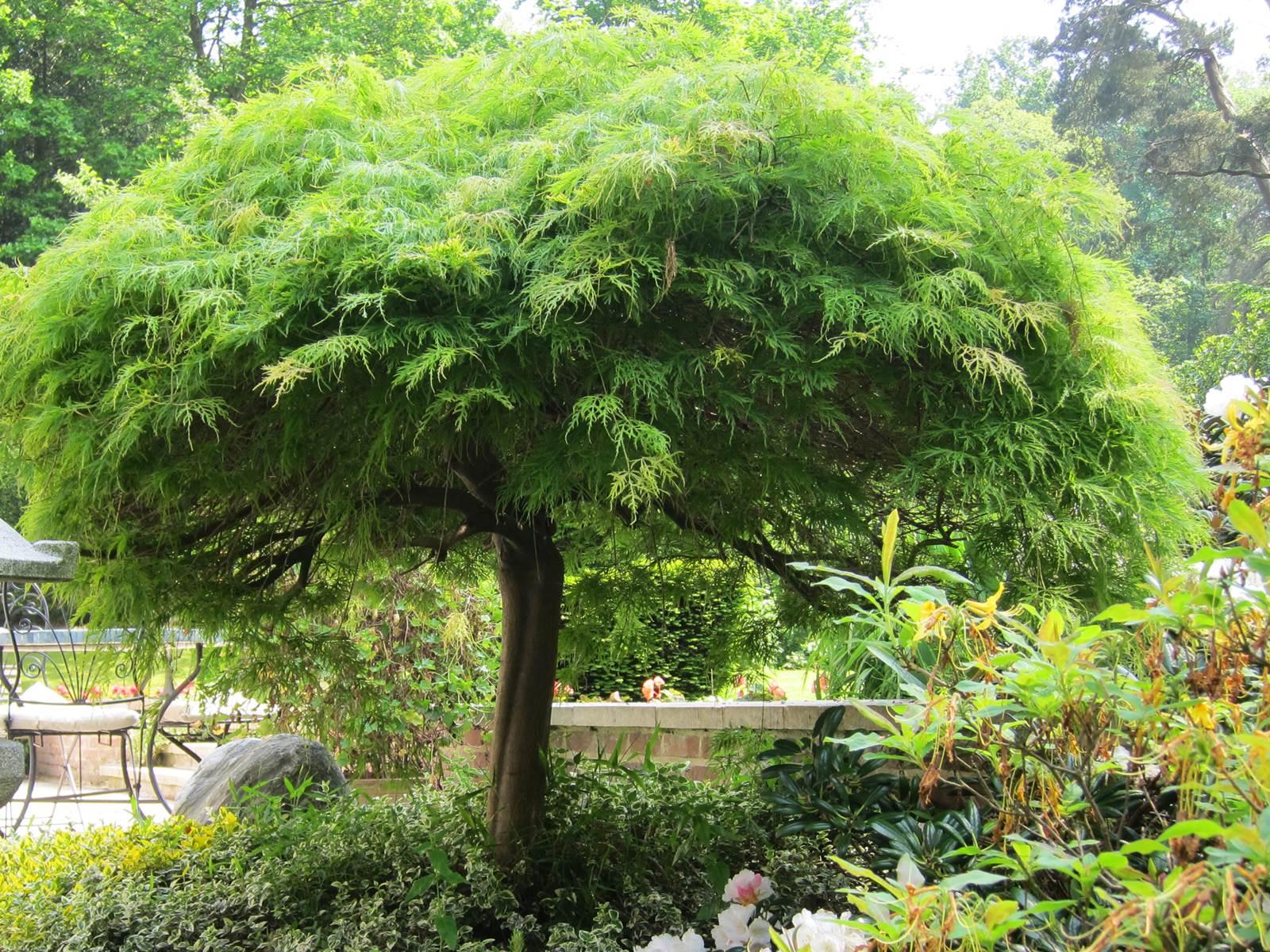 Arbre conseils de plantation la terre est un jardin for Conseil plantation jardin