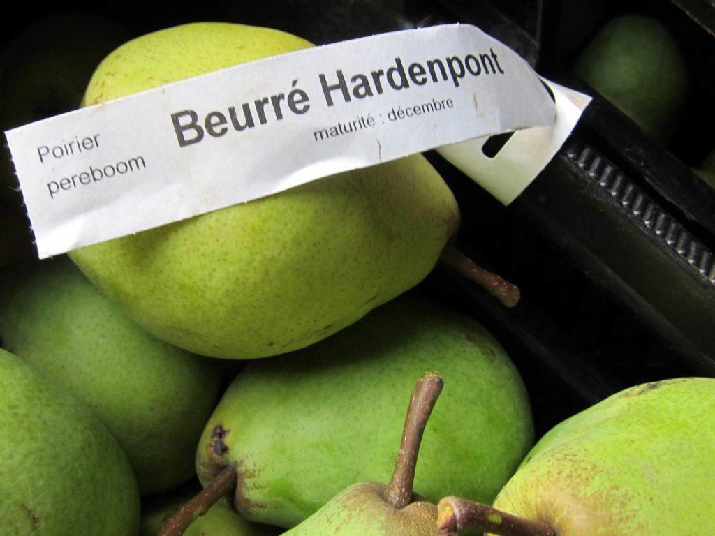 palissage arbres fruitiers Pépinières d'Enghien