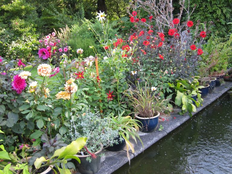 jardin de Danielle