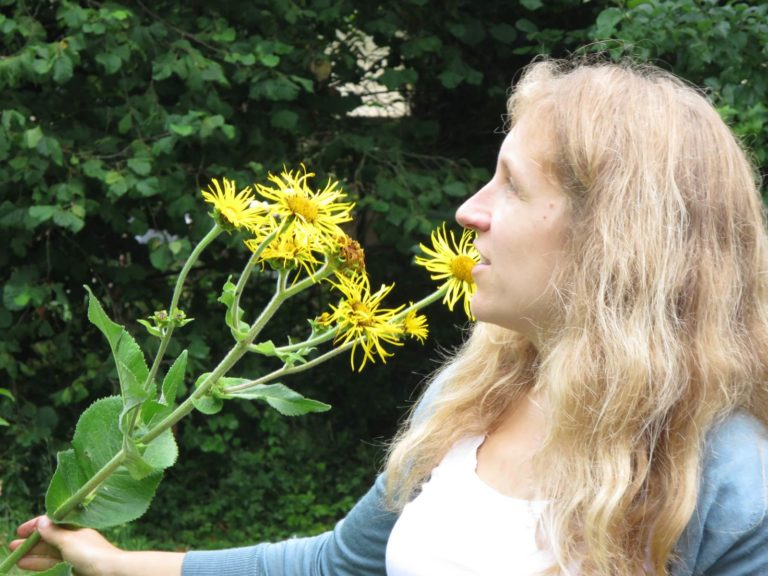 Marie Fripiat herboristerie