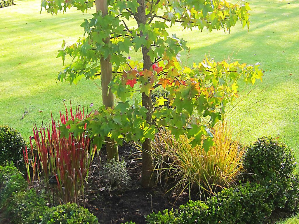 arbre plantation