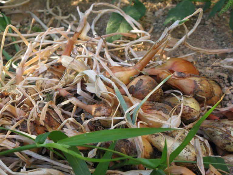 Jardinage Bio-dynamie