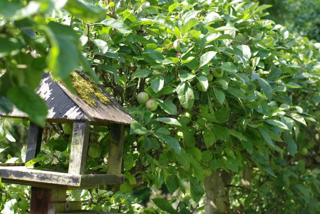 Jardiner en bio-dynamie