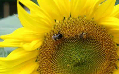 Bio-dynamie, jardiner en écoutant la Terre