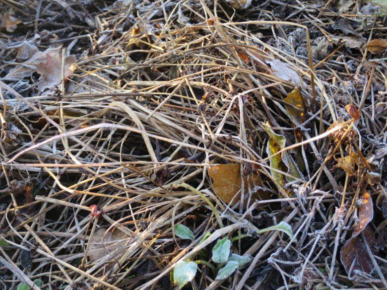Jardin janvier géranium vivace