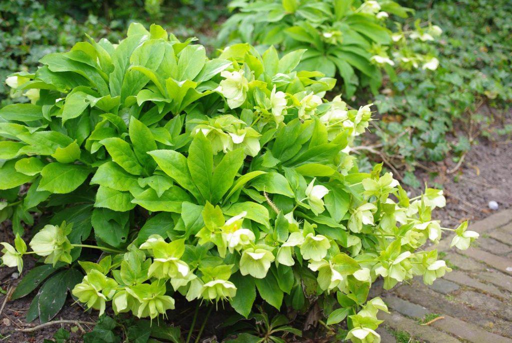 Astro jardin Taureau