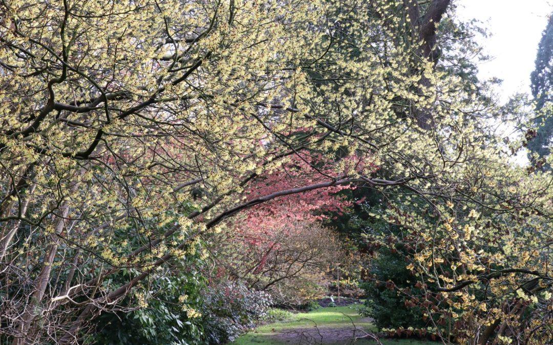 Arboretum de Kalmthout, magique en hiver!