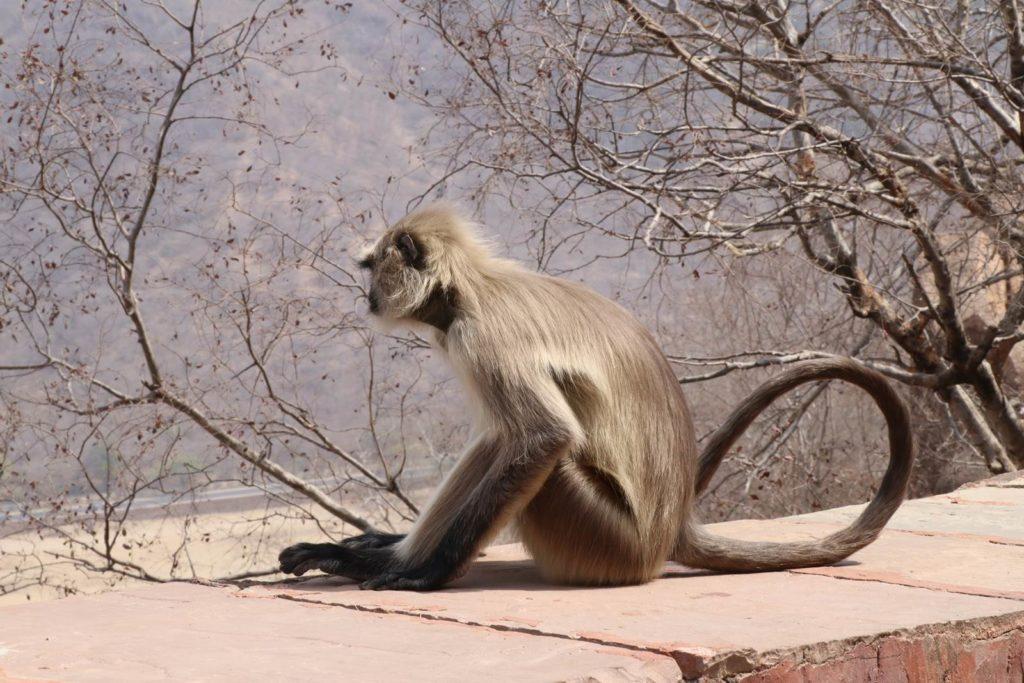 Jaipur Fort de Jaigarh