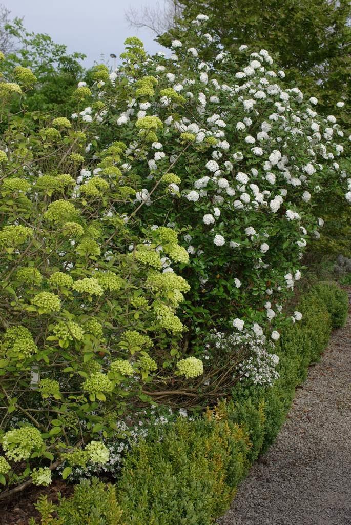 Arbustes feuillage caduc