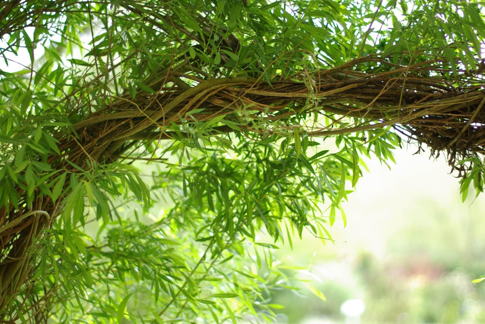 L\'osier vivant, une clôture poétique - La terre est un jardin