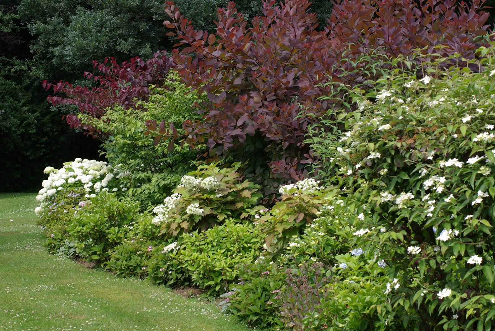 Quand Et Comment Tailler Un Houx tailler les arbustes - la terre est un jardin