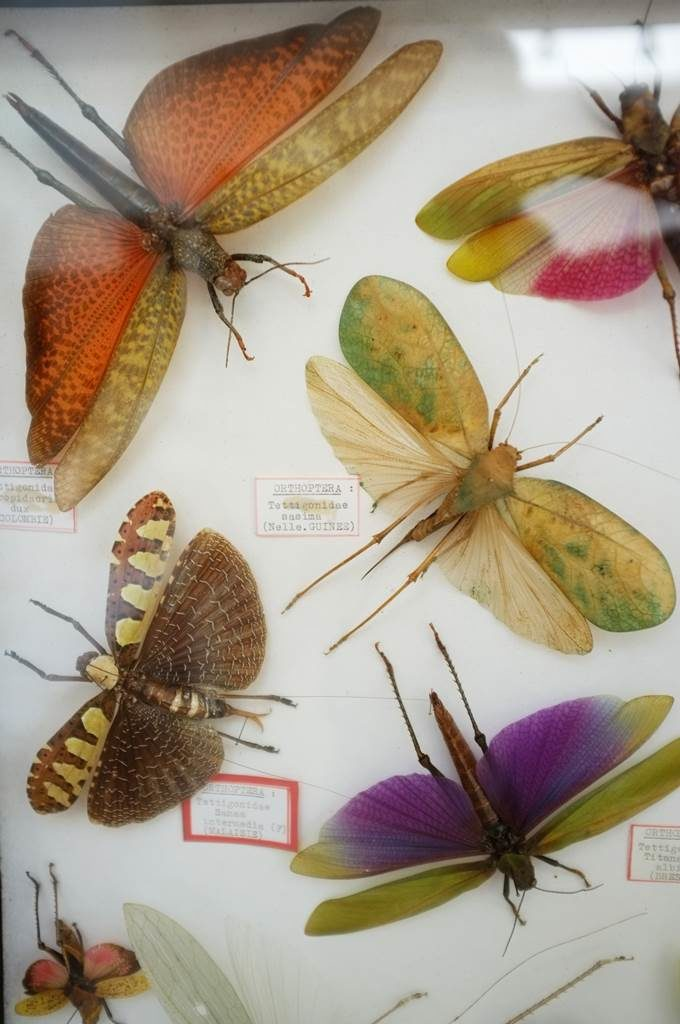 Jean-Henri Fabre papillons