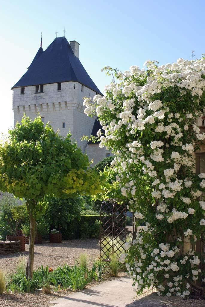 Rivau sur Loire