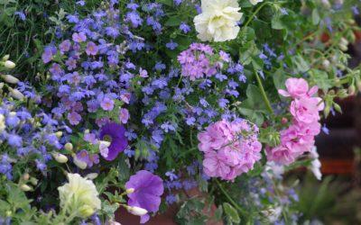 Fleurir une jardinière pour l'été
