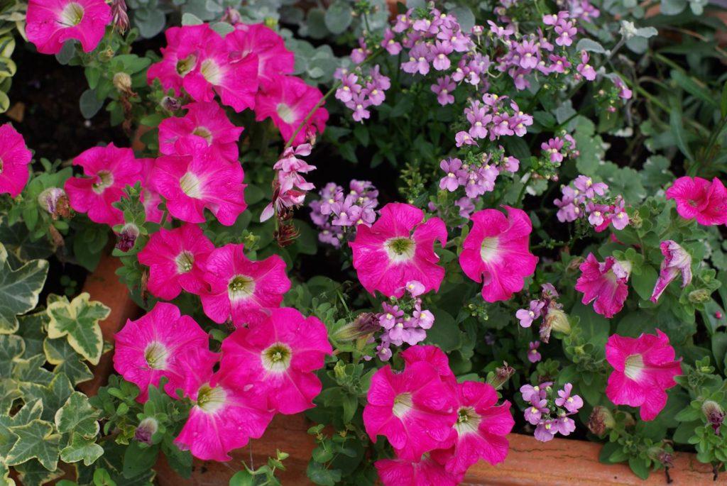 Fleurir une jardinière