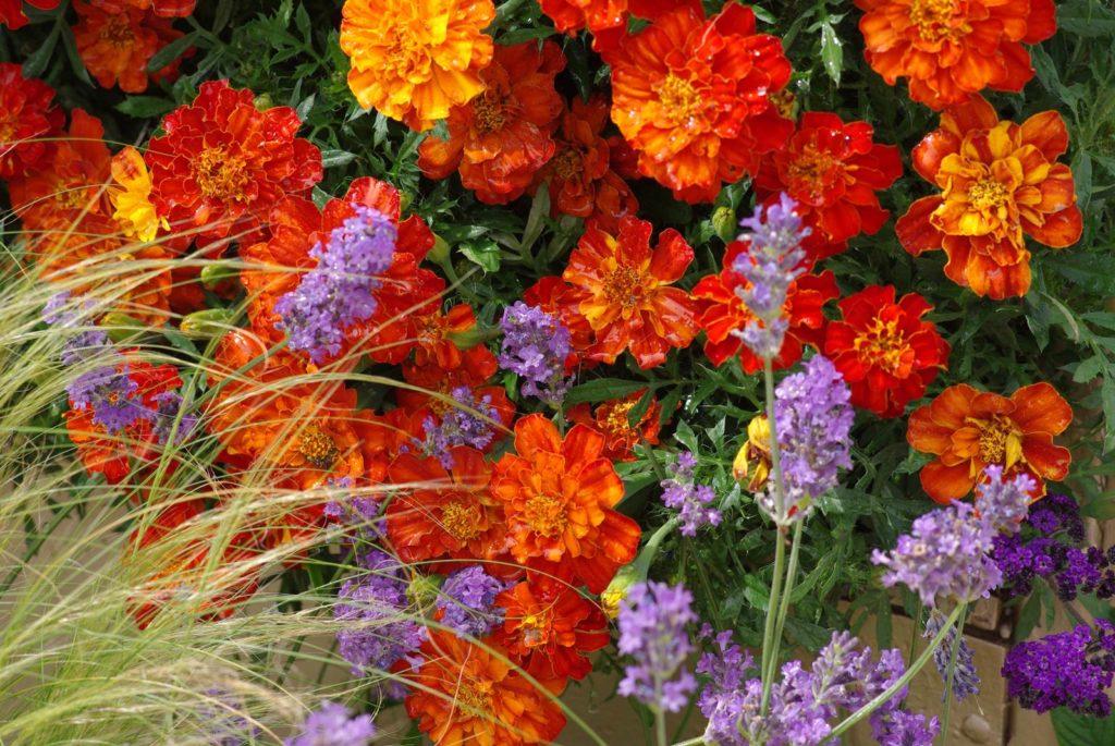 fleurs ombre jardinire simple fleurs hiver jardinire with fleurs ombre jardinire awesome. Black Bedroom Furniture Sets. Home Design Ideas