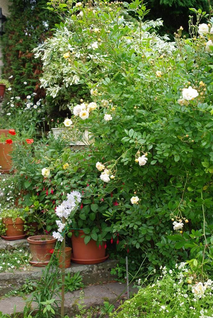 Jardin d'Alice