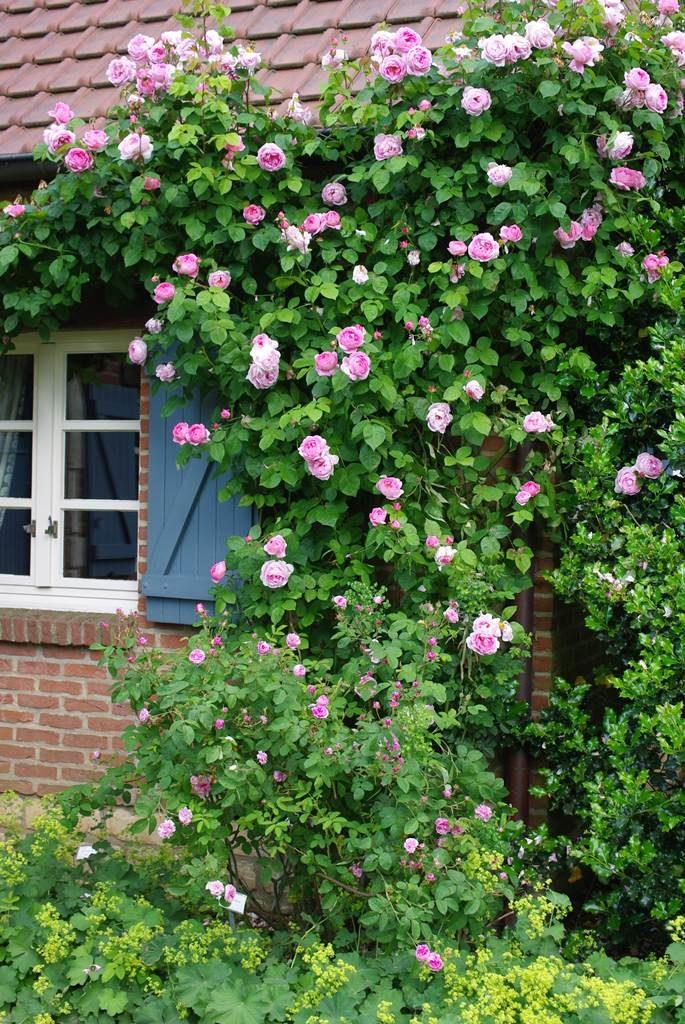 Jardin de la ruelle rose