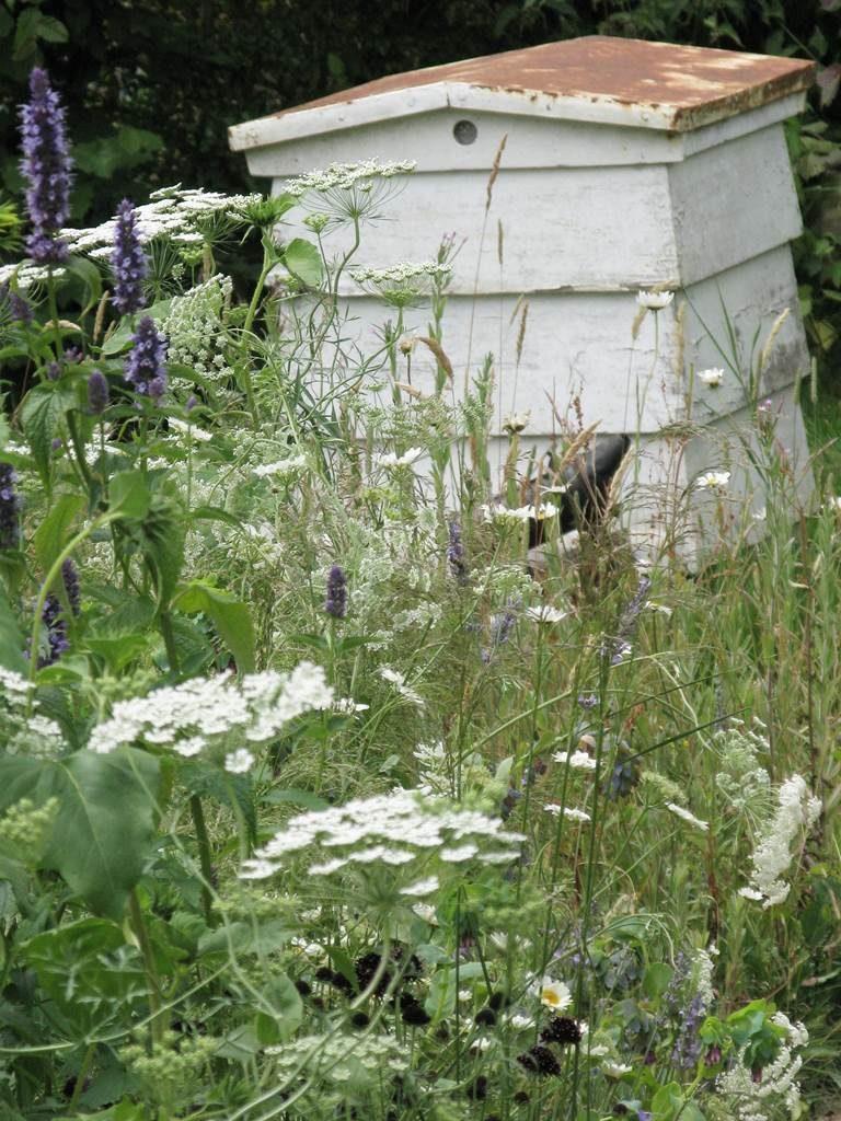 Jardin mellifère