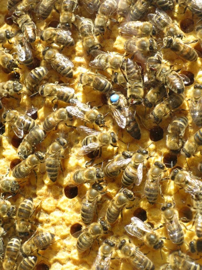 Jardin mellifère abeilles