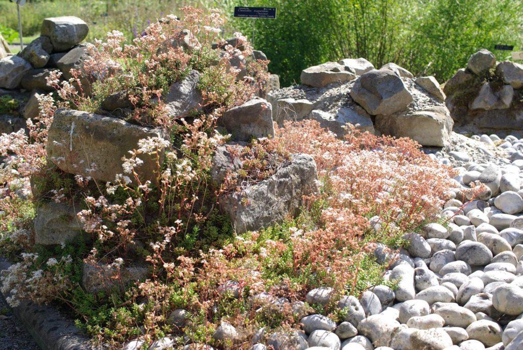Un jardin sur gravier - La terre est un jardin
