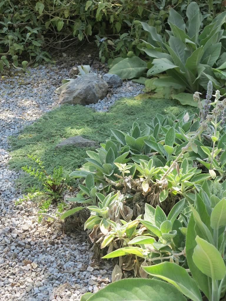 Jardin sur gravier