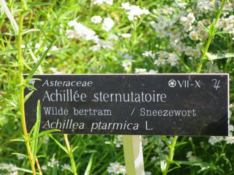 Jardin des plantes sauvages de Bailleul