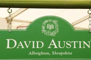 Roses David Austin