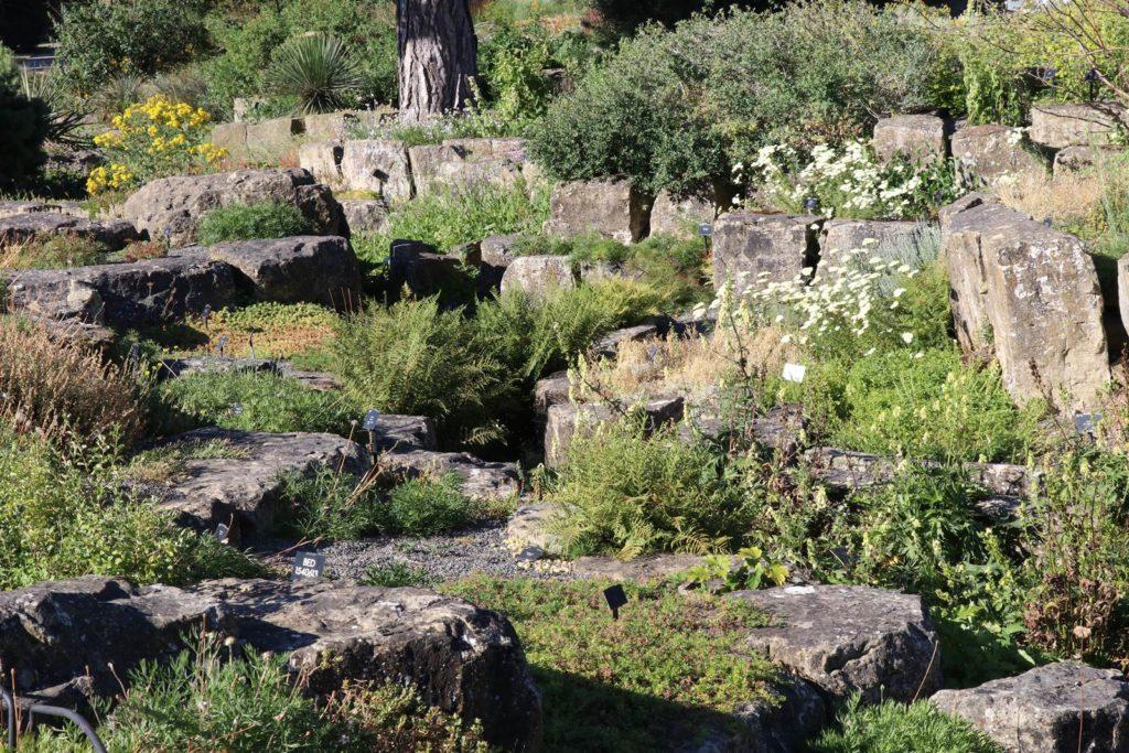 Kew Rocaille