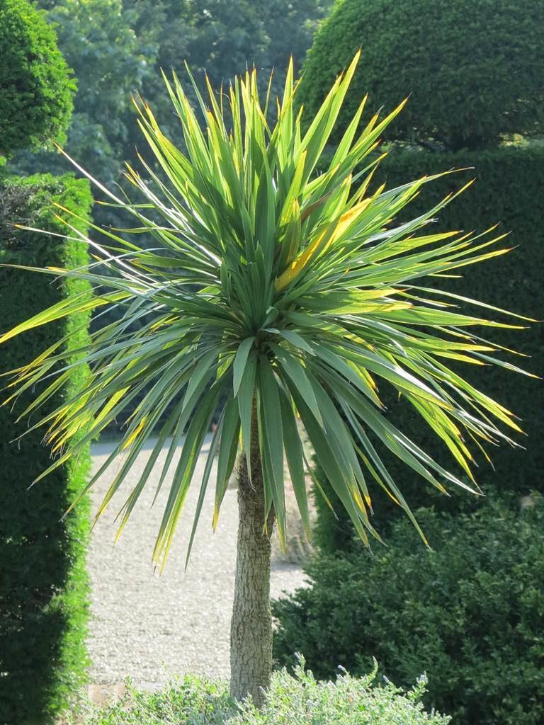 Plante du Sud